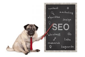 Pug dog pointing out SEO tools and tips written on chalkboard